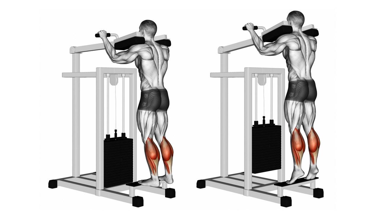 how to use standing calf raise machine