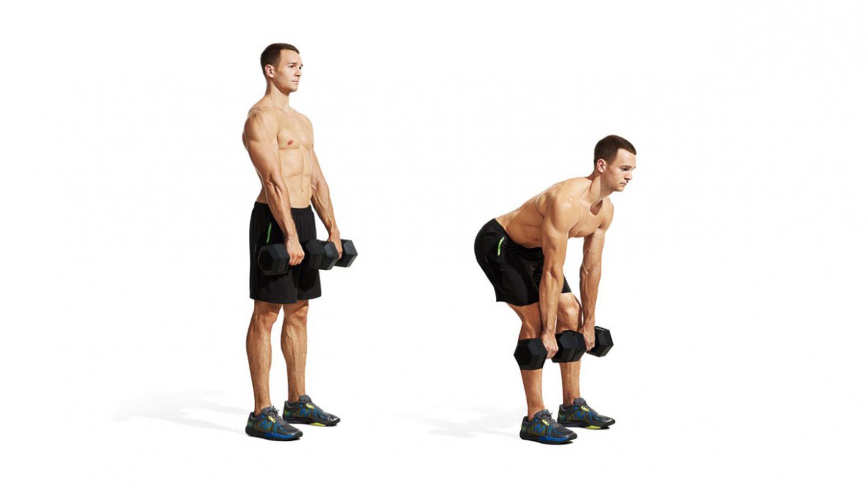 stiff leg dumbbell deadlift muscles worked