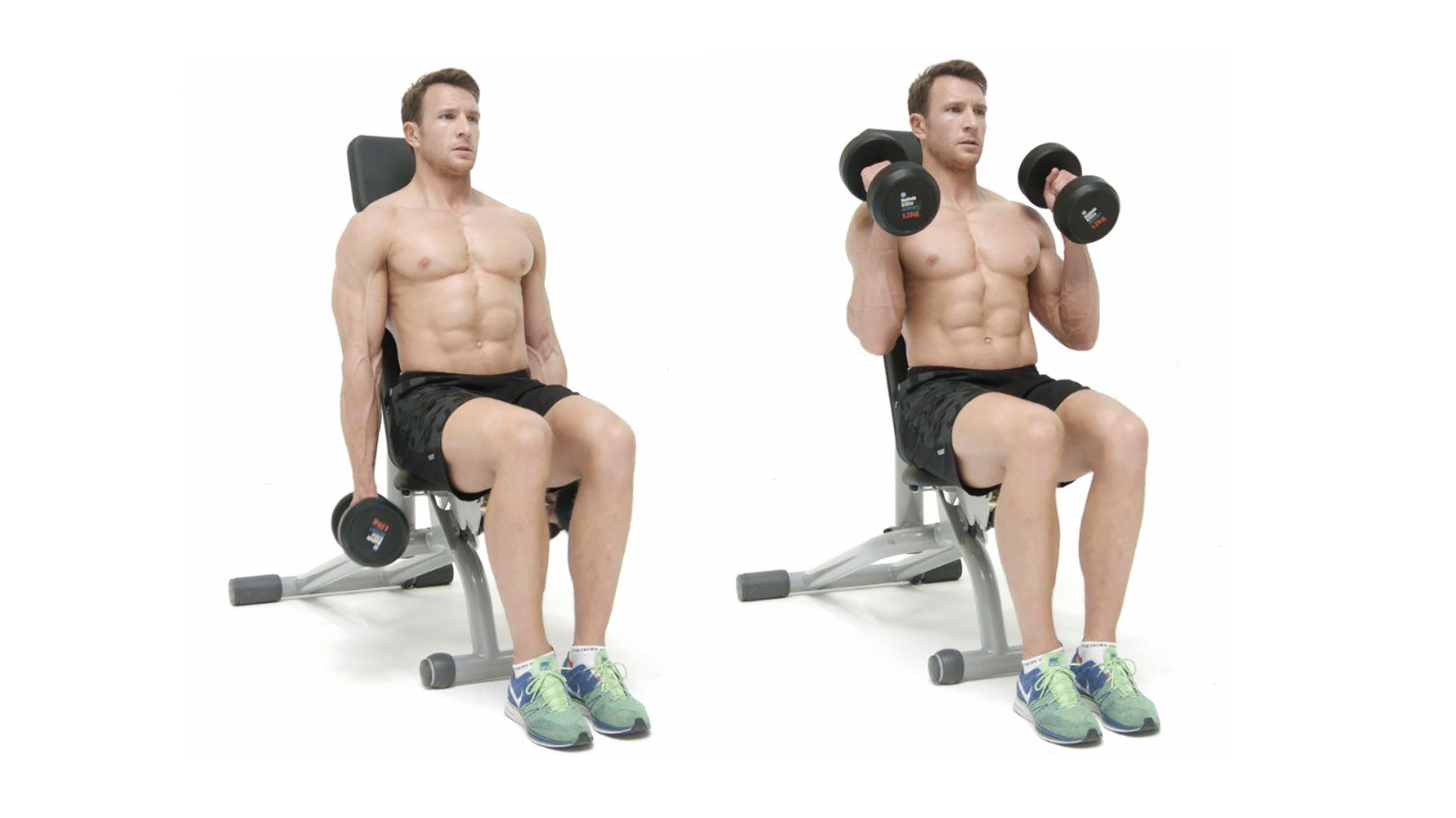 seated dumbbell hammer curls